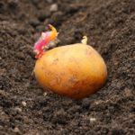 Удобство посадки картофеля при помощи картофелесажалки