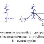 Параметры окучивания растений