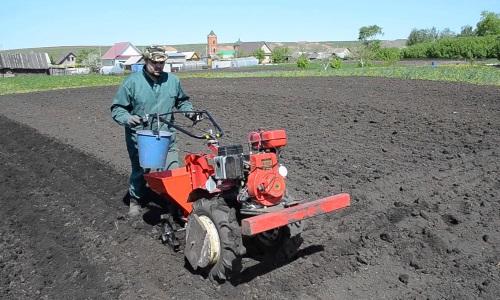 Особенности посадки картофеля при помощи мотоблока