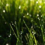 Мокрая трава - опасность для работы электрокосилок